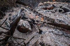Falò, carboni e ceneri nella foresta fotografia stock