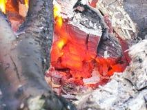 falò in magnal e carboni Nella foresta fotografia stock libera da diritti