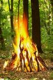 Falò nella foresta Immagine Stock