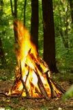 Falò nella foresta Immagini Stock