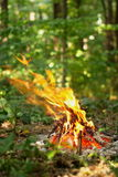 Falò nella foresta Fotografie Stock