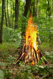 Falò nella foresta Fotografie Stock Libere da Diritti