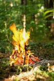 Falò nella foresta Immagine Stock Libera da Diritti