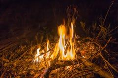 Falò nella foresta di notte fotografia stock