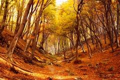 fal hiking тропка Венгрии Стоковая Фотография RF