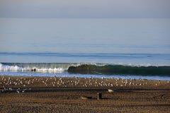 Fala łama na brzeg plaża w losie angeles Zdjęcia Royalty Free
