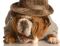 Fala do cão fotografia de stock