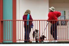 Fala dos amantes do cão Fotos de Stock Royalty Free