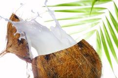 fala kokosów Zdjęcie Royalty Free