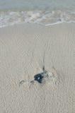 Fala na plaży Zdjęcia Stock