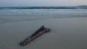 Fala przy Samet plażą zbiory