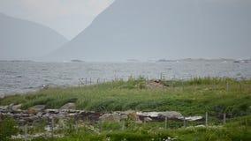 Fala uderza dennego brzeg głazy z zielonym paśnika przedpolem w lecie zdjęcie wideo