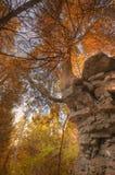 Falaise d'automne Photos libres de droits