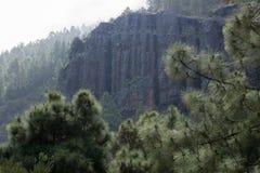 Falaise dans la forêt de Ténérife photo stock