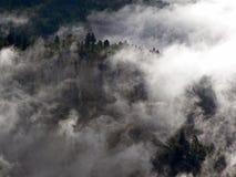 Falaise et arbres avec le nuage inférieur et le brouillard Images libres de droits