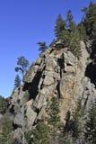 Falaise et pins de montagne rocheuse Image libre de droits