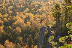 Falaise rétro-éclairée avec des pins au-dessus des arbres dans la couleur de chute sur Oberg Moun Photo libre de droits