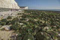 Falaises blanches, cieux bleus et algue verte - sept soeurs, East Sussex, Angleterre, R-U ; automne 2018 photographie stock libre de droits