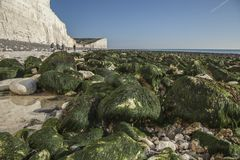 Falaises blanches, cieux bleus et algue verte - sept soeurs, East Sussex, Angleterre, R-U ; En octobre 2018 photographie stock
