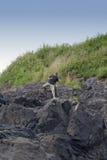 falaises de plage montant le long homme mûr photographie stock libre de droits