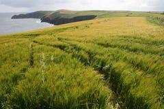 Falaises et plantations, comté de liège, Irlande Photo stock