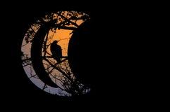 Falcão da noite Imagens de Stock Royalty Free