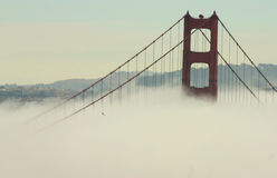 Falcão que voa sobre golden gate bridge Fotos de Stock Royalty Free