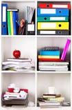 Falcówki na półkach Obrazy Royalty Free