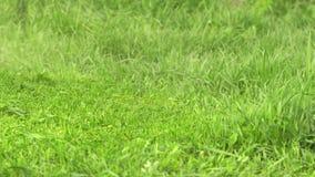 Falciatura dell'erba con una vecchia falciatrice elettrica manuale stock footage