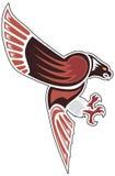 Falco aborigeno nell'attacco. Fotografia Stock Libera da Diritti