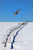 Falco di caccia Fotografia Stock