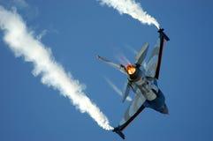 Falco di combattimento Fotografie Stock