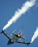 Falco di combattimento Immagine Stock Libera da Diritti