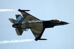 Falco di combattimento Fotografia Stock Libera da Diritti