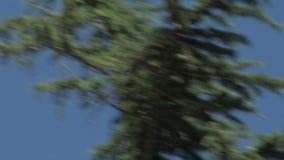 Falco di volo archivi video