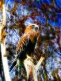 Falco leggero Fotografia Stock Libera da Diritti