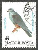 Falco pagato rosso fotografie stock libere da diritti