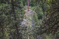 Falco pescatore selvaggio appollaiato sull'albero in foresta immagini stock