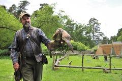 Falcoeiro com cherrug do falco do falcão. Fotos de Stock Royalty Free