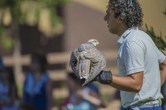 Falcon bird Royalty Free Stock Image