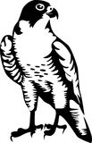 Falcon. Black and white illustration Royalty Free Stock Images