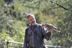 Falcon,falco cherrug . Stock Images