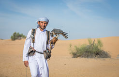 Falcon and falconer Royalty Free Stock Images
