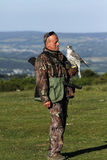 Falcon on Falconers Hand Royalty Free Stock Images