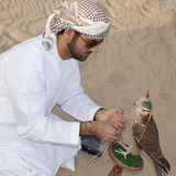 Falcon, falconry, falconer. A Arab falconer training the falcon in Dubai desert royalty free stock images
