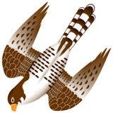 Falcon in flight Royalty Free Stock Photo
