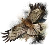 Falcon in flight. Watercolor painting Royalty Free Stock Image