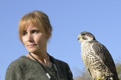 Falcon and handler Royalty Free Stock Photo