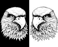 Falcon heads in black and white Royalty Free Stock Photos