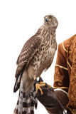 Falcon hunter isolated on white Royalty Free Stock Images